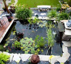 Hồ cá sân vườn – Hướng dẫn thiết kế hồ cá trong sân vườn