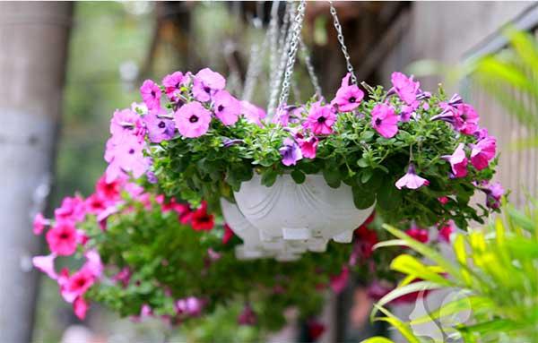 hoa-trong-san-vuon-dep-10
