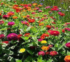 Hoa trồng trong sân vườn – Hướng dẫn chọn hoa trồng trong sân vườn