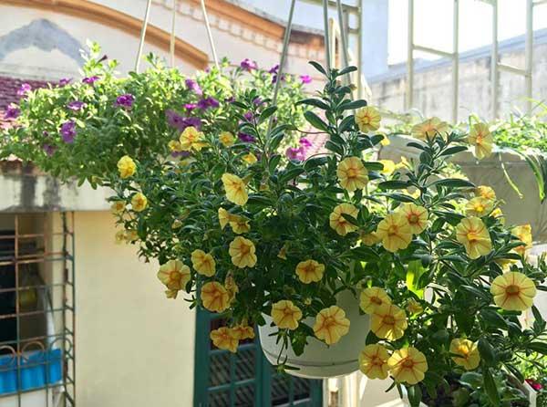 hoa-trong-san-vuon-dep-15