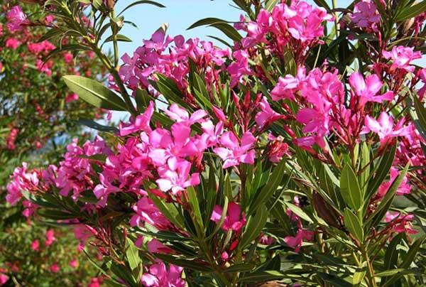 hoa-trong-san-vuon-dep-17
