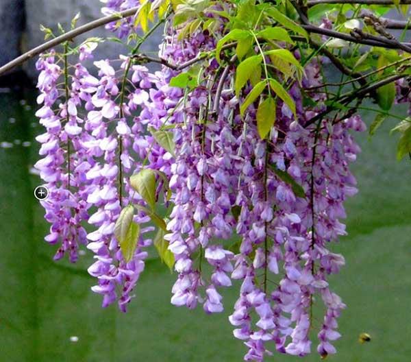 hoa-trong-san-vuon-dep-2