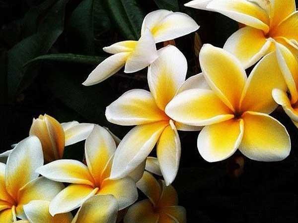 hoa-trong-san-vuon-dep-5