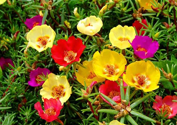 hoa-trong-san-vuon-dep-6
