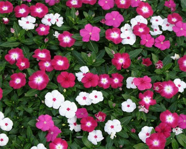 hoa-trong-san-vuon-dep-8