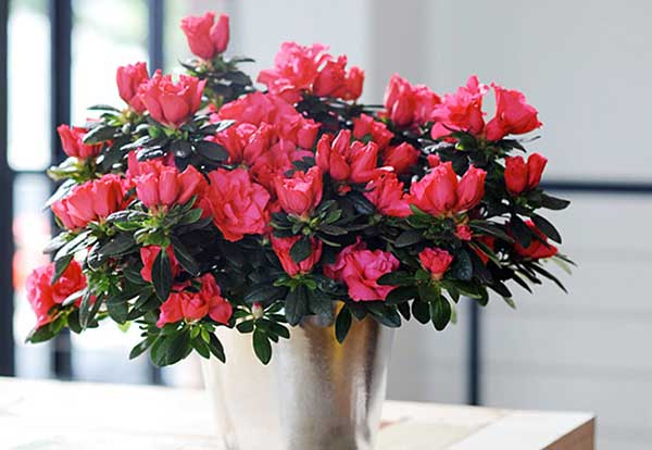 hoa-trong-san-vuon-dep-9