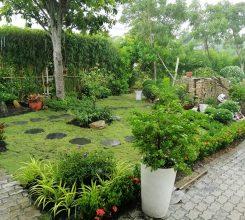 Thiết kế, thi công sân vườn tại Đông Anh, nhà anh Thanh