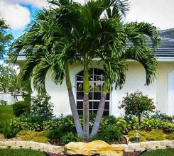 Cây dừa cảnh – Cây cảnh đẹp tô điểm cho không gian quanh vườn