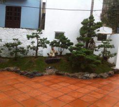 Mẫu thiết kế đồi tùng mini đẹp đưa cả thiên nhiên vào sân vườn