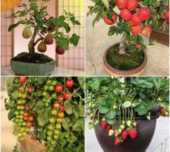 9 loại cây ăn quả trồng chậu dễ chăm sóc, ra quả đẹp