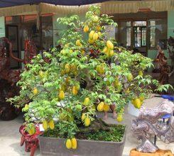10 loại cây ăn quả trước nhà hợp phong thủy, dễ trồng và chăm sóc