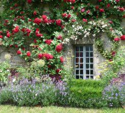10 loại cây hoa leo đẹp dễ trồng làm đẹp cho không gian nhà