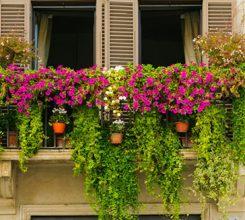 Top 8 cây trồng ban công chịu nắng tốt nhất, dễ trồng và chăm sóc