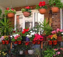 Hoa trồng ban công – Hướng dẫn trồng hoa ban công tuyệt đẹp
