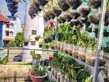 Thiết kế vườn lan trên sân thượng và những kiến thức cơ bản cần nắm rõ