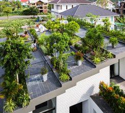 Kinh nghiệm trồng cây trên sân thượng đơn giản, xanh mướt lá