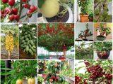Bộ sưu tập 8 cây ăn quả dễ trồng nhất cho quả nhiều
