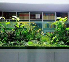 11+ loại cây thủy sinh đẹp, dễ trồng và chăm sóc