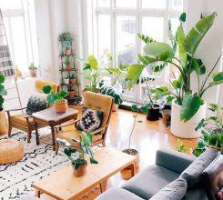 Bộ sưu tập 10 loại cây trồng thanh lọc không khí trong nhà
